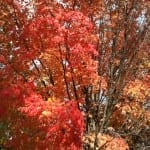 Vermont Maple Syrup -Recipes and Tips, Warm Spiced Rum Cider, Apple Maple Salmon