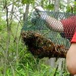 Crawfishing In The Atchafalaya Basin
